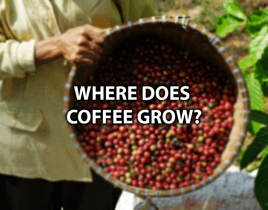 Where Does Coffee Grow?