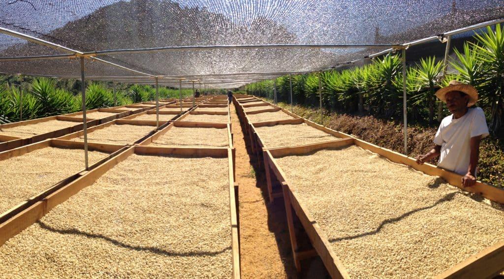 how do you roast coffee beans